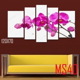 Tranh ghép bộ 5 bức hoa lan MS40