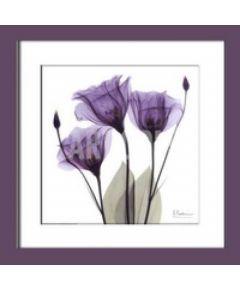 Tranh in nghệ thuật màu tím 012a